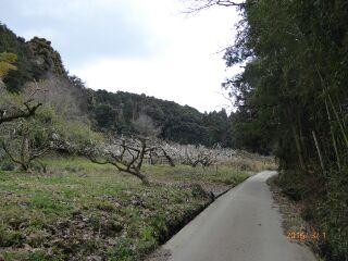山の辺の道1